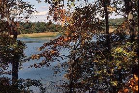 Fall foliage at Turning Point Park.
